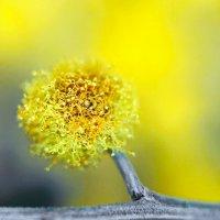 Росло деревце на ветке... :: Игорь Суханов