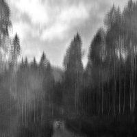 одна...в лесу... :: Лара Leila