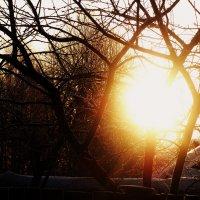 Весна :: Мила Коллинз