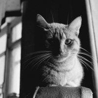 Кошка :: Ольга Коблова