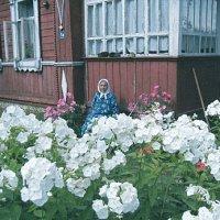 прабабушка :: Маргарита Волк