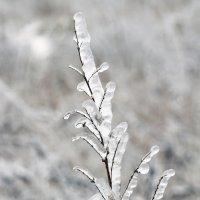 Хрустальное растение :: Виктория Левина