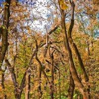 Осень в парке-2 :: Евгений Мокин