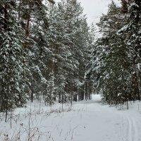 В лесу, середина марта :: Александр Садовский