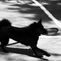 Frisbee! :: Света Гончарова