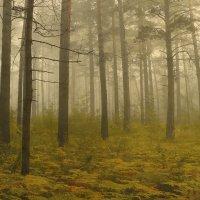 в тумане :: Алексей Карташев