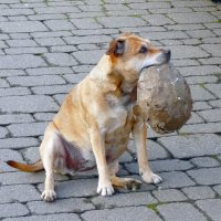 Любимый старый мяч :: Natalia Harries