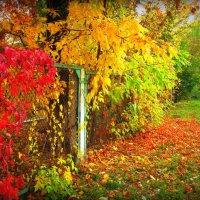 Осень Ван Гога :: Мария Машук Наклейщикова
