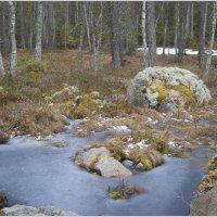 весна в Уппландском лесу :: liudmila drake