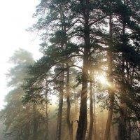 Лучисто молодое солнце... :: Лесо-Вед (Баранов)