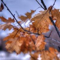 Весенний ветерок :: Андрей Куприянов