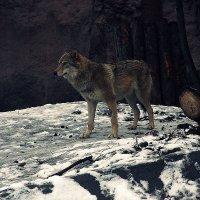волк :: lilya_ki .