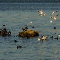 Птичьи острова :: Вера Бережная