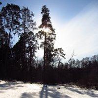 IMG_3826 - Мартовские тени :: Андрей Лукьянов