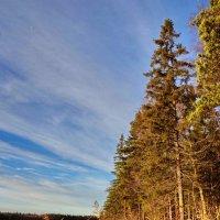 Озеро в глуши лесов :: Валерий Талашов