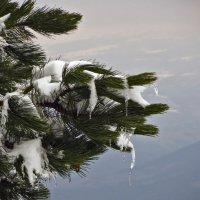 В лапе зимы :: Наталья Джикидзе (Берёзина)
