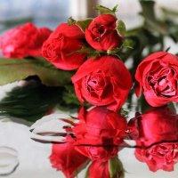 Розовый мираж...из роз :: Галина Стрельченя