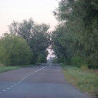 дорога :: lilya_ki .
