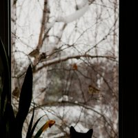 Охота :: Мария Степанова