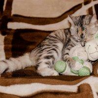 Спят усталые игрушки! :: Сергей и Ирина Хомич