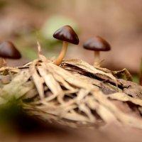 Уже грибы :: Анна Никонорова