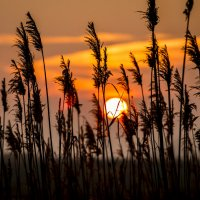 Рассвет над степью :: Алексей Бойко