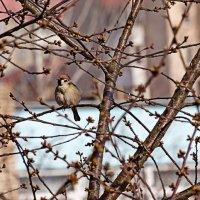 Ура, весна! :: Ирина Приходько