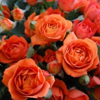 Коралловые розы :: Светлана Лысенко