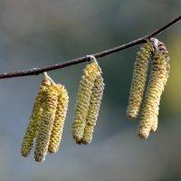 Весна пришла! :: оля san-alondra