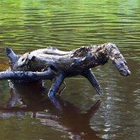 Водяная собачка :: Aнна Зарубина