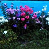 Цветы у дома :: Mary Коллар