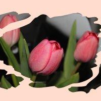 Цветы всегда радость... :: Tatiana Markova