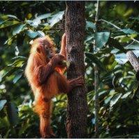 А втихаря покурить бамбук слабо???  ZOO Сингапур!!! :: Александр Вивчарик
