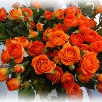 Ах, эти чудные розы! :: Svetlana27