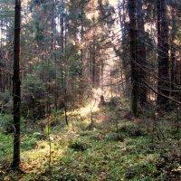 В лесу :: alek48s