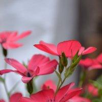 цветочки :: Grenka Клименко
