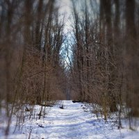 Мартовский лес :: Татьяна Кретова