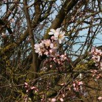 Ура весна!!! :: Павел Рябцев