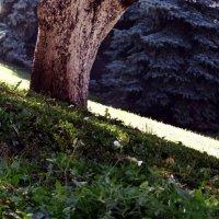 ствол  одного  дерева :: Дмитрий Потапов