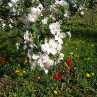 Пора цветения :: Grey Bishop
