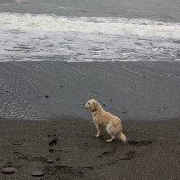 Пёс и море :: Виолетта
