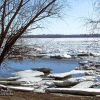 Природа в марте. :: Анатолий
