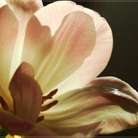 Весна вершит земные чудеса :: Swetlana V