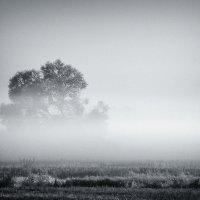В слоистом тумане рассвета :: Игорь Белоконь