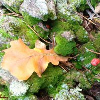 Всё дышало осенью... :: °•●Елена●•° ♀
