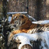 Новосибирский зоопарк :: Иван Янковский