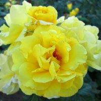 Солнечное сплетение... :: Тамара (st.tamara)