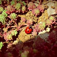 весна вдохновляет :: Исли Омарова