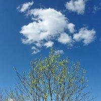 """Из серии """"Весенние облака"""" 5 :: Валерий Талашов"""