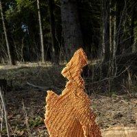 Господи,спаси наш лес! :: Валерий Талашов